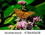silver washed fritillary.... | Shutterstock . vector #478640638