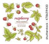 raspberry berries and leaves...   Shutterstock .eps vector #478659430