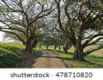 A Road Lined With Trees In A...