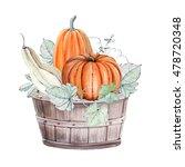 Pumpkins. Hand Drawn Watercolo...