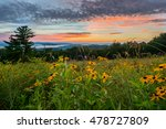 Black Eyed Susan Flowers At...