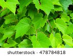 Nature Background Of Grape...