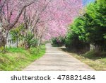 Cherry Blossom Pathway In...
