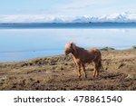 an icelandic horse | Shutterstock . vector #478861540