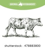 sketch of cow drawn by hand.... | Shutterstock .eps vector #478883800