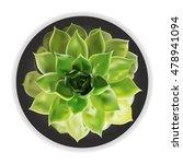 small fresh green succulent... | Shutterstock .eps vector #478941094