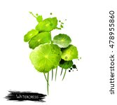 Watercress Isolated On White...