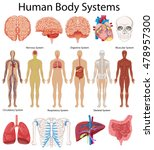 diagram showing human body... | Shutterstock .eps vector #478957300