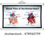diagram showing blood flow in... | Shutterstock .eps vector #478960759