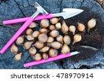 Flower Bulbs On Wooden...