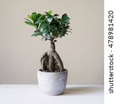 Small photo of bonsai ginseng or ficus retusa also known as banyan or chinese fig tree