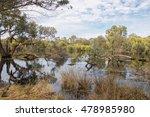 Peaceful Lake In Lush Wetland...