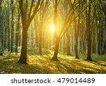 autumn forest with the cut... | Shutterstock . vector #479014489
