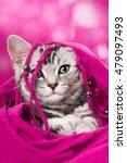 Stock photo cute kitten 479097493