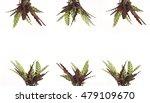 calathea rufibarba plants | Shutterstock . vector #479109670