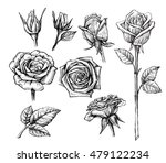Vector Roses With Leaves Set O...