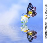 Colorful Butterfly With Blue...