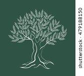 olive tree outline silhouette...   Shutterstock .eps vector #479188150
