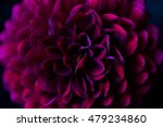 close up of a dahlia on black... | Shutterstock . vector #479234860