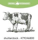 sketch of cow drawn by hand.... | Shutterstock .eps vector #479246800