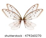 Insect Cicada Wing  Isolated O...
