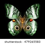 Color Butterfly Owl   Isolated...