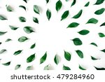 green leaves frame on white... | Shutterstock . vector #479284960