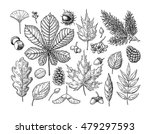 autumn vector set with leaves ... | Shutterstock .eps vector #479297593