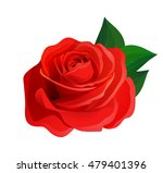 Stock vector vector beautiful realistic red rose with green leaves decorative design element 479401396