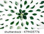 green leaves pattern on white... | Shutterstock . vector #479435776