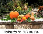 pumpkins in garden. autumn...   Shutterstock . vector #479481448