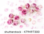 pink roses on white background. ... | Shutterstock . vector #479497300