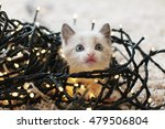 Stock photo funny little cat and christmas tree 479506804