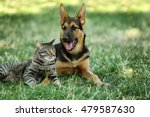 Stock photo cute dog and cat on green grass 479587630