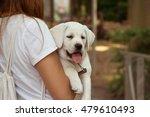 labrador retriever dog on the... | Shutterstock . vector #479610493