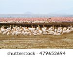 lake manyara flamingos  | Shutterstock . vector #479652694