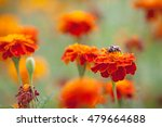 bumblebee sitting on a bright... | Shutterstock . vector #479664688