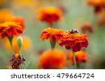 bumblebee sitting on a bright... | Shutterstock . vector #479664724