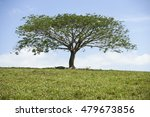 a tree standing upright in the... | Shutterstock . vector #479673856
