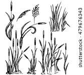 reeds. marsh grass. raster...   Shutterstock . vector #479676343