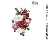 bouquet of roses  watercolor ...   Shutterstock . vector #479716480