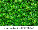 Green Plant. Leaves Background.