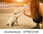 Stock photo handshake between woman and pretty puppy high five teamwork between girl dog 479821534