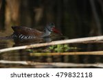 Small photo of African rail in water at dam with reeds, South Africa