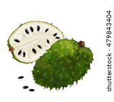 ripe soursop fruits isolated on ... | Shutterstock .eps vector #479843404