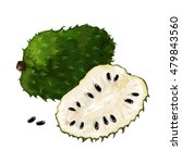 ripe soursop fruits isolated on ... | Shutterstock .eps vector #479843560