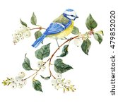 Watercolor Snowberry And Bird...