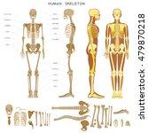 human anatomy. realistic... | Shutterstock .eps vector #479870218