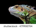 iguana   picturing a headshot... | Shutterstock . vector #479900704