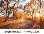 Autumn Forest. Forest With...